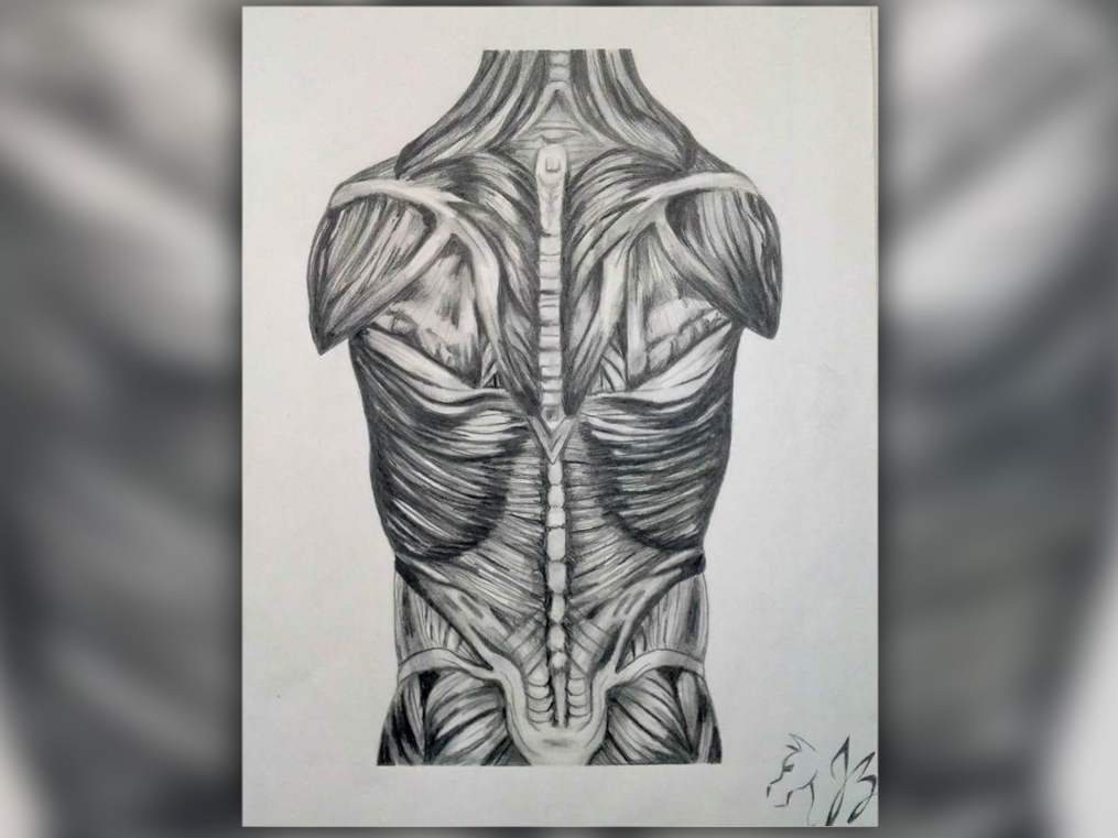 drawing of a human back